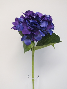 Hydrangea stem violet 1989