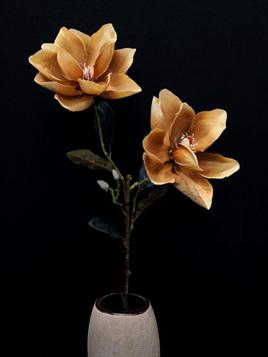 Magnolia Bloom  Coffee 4095