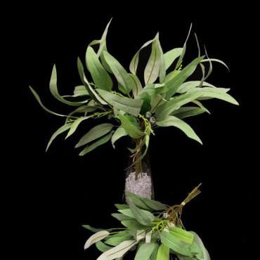 Gum leaf Grey 4166