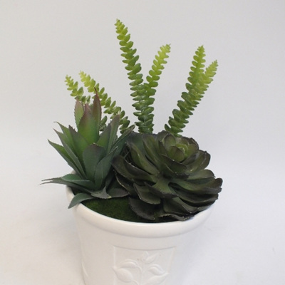 Succulents in white pot 2145