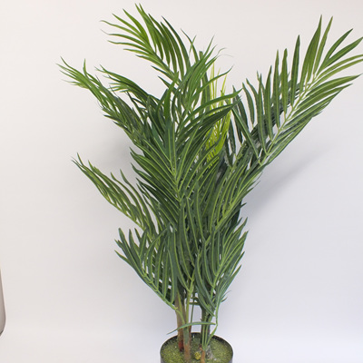 Areca Palm in pot 4041