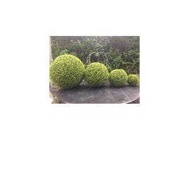Boxwood Ball  1485 - 9