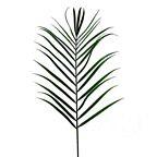 Areca Palm Frond 4265