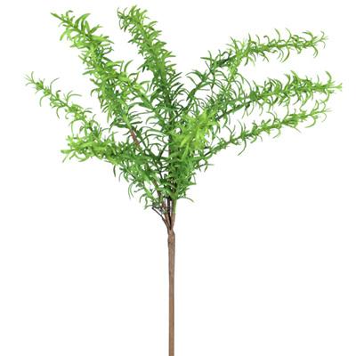 Rosemary bush 4297