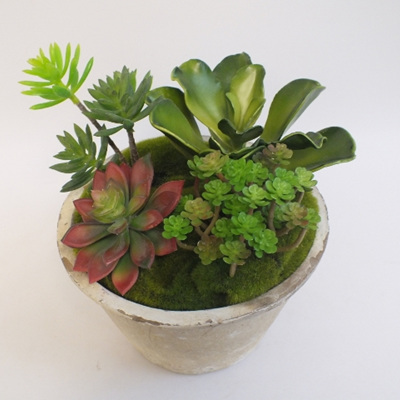 Succulents in concrete pot - medium 2146