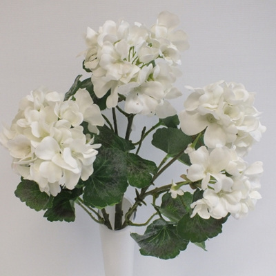 Geranium bush white 4444