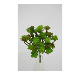 Succulent mini bush 4003
