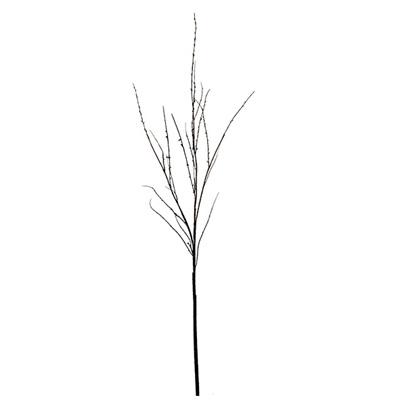 Twig Branch 4362