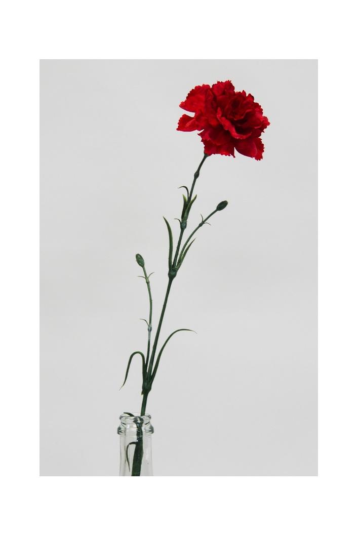 #artificialflowers #fakeflowers #decorflowers #fauxflowers#carnation#red#