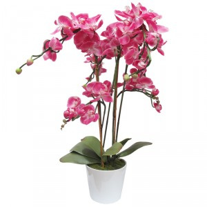 Phalaenopsis orchid pink in pot 1475