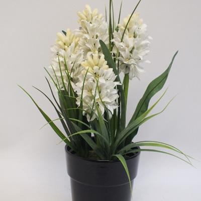 Spring Hyacinths 2132