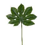 Aralia leaf 4158