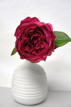 Rose Cabbage pick Fushia pink 4005