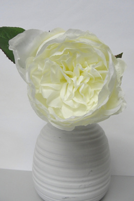 Rose Cabbage pick White/cream 4006