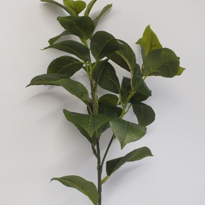 Camelia foliage spray 1821