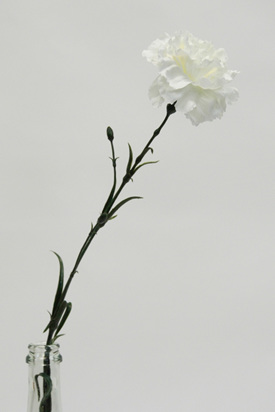 Carnation 4403 White