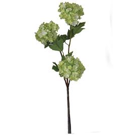Viburnum - Snowball 1881 Green/cream