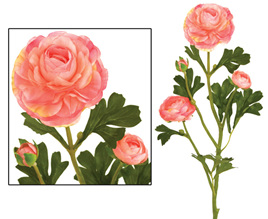 Ranunculus  Pink 1925
