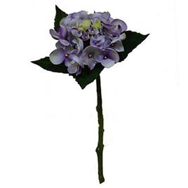 Hydrangea 1877 short stem