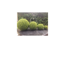 Boxwood Ball  1485 - 9