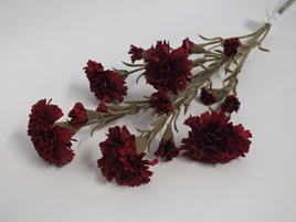 Carnation 4352