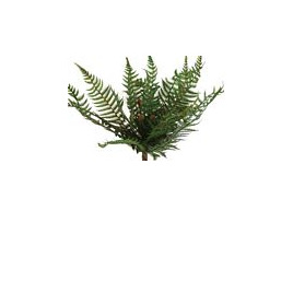 Fern NZ bush 1861