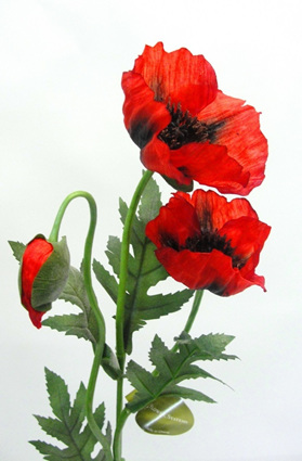 Poppy Flanders Red 4273