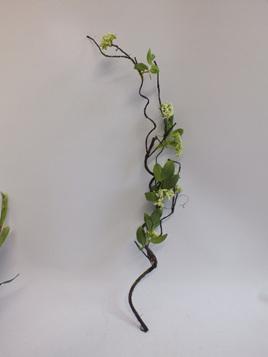 Flowering Vine 1935