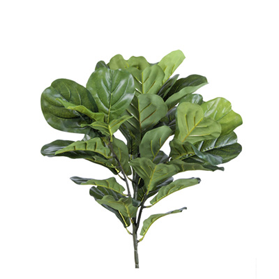 Fiddle leaf Bush 4163