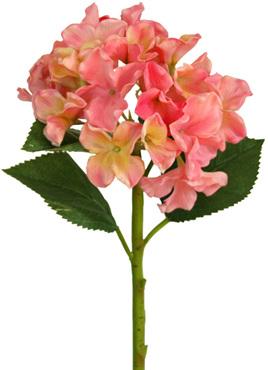 Hydrangea Apricot pink 1904
