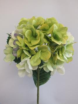 Hydrangea stem green 1930