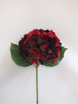 Hydrangea stem Dark red 1929