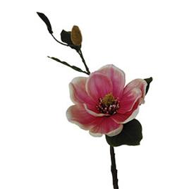 Magnolia pink cream 1916