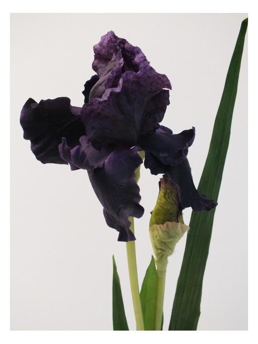 #artificialflowers #fakeflowers #decorflowers #fauxflowers#mauve#iris#silk