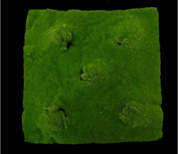 #artificialflowers #fakeflowers #decorflowers #fauxflowers#moss#greenery