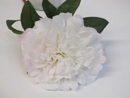 Peony Baroness white 4196