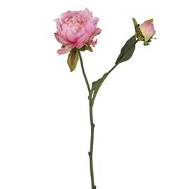 Peony Classic Pink 4306