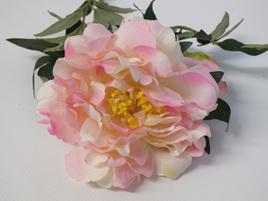 Peony Pink Cream 4331