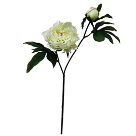 Peony single white 4191