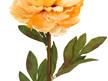#artificialflowers #fakeflowers #decorflowers #fauxflowers #peonyburntcream