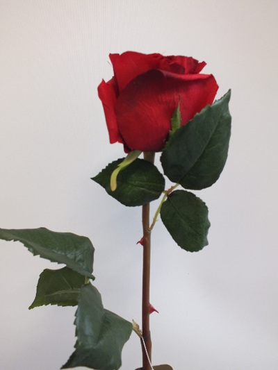 Rose Romance Red 1940