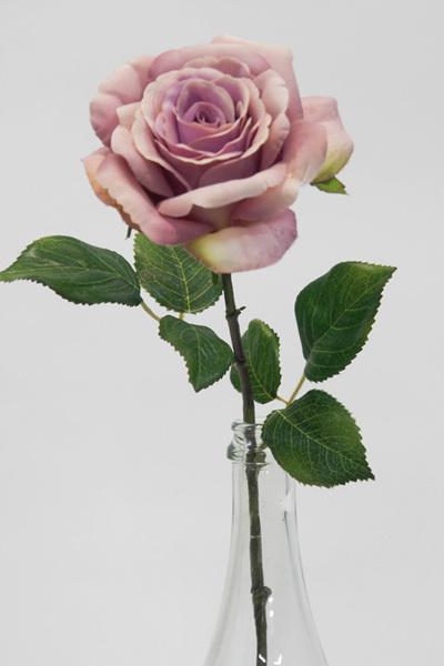 Rose English 1977 Lavender