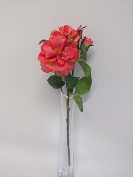 Rose spray garden raspberry pink 1953