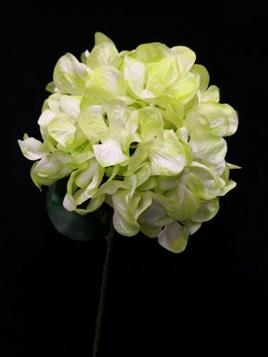 Hydrangea Green 4169