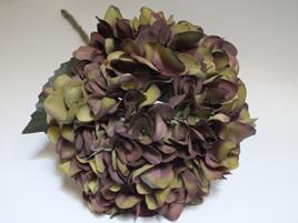 Hydrangea Olive 4379