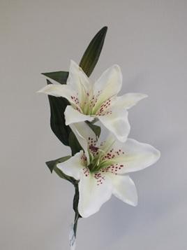 Lily cream 4415