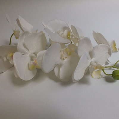 Orchid Phalaenopsis with plant 4254