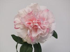 Peony Baroness soft pink 4250