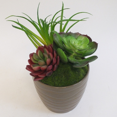 Succulents in brown wave pot 2144