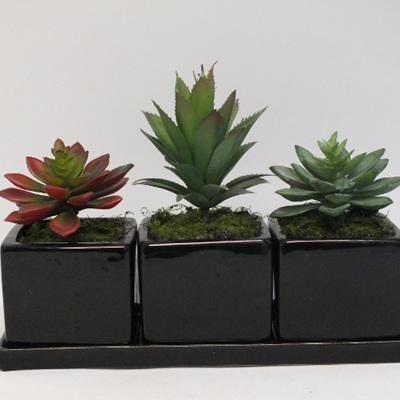Trio of Succulents 2135